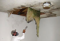 We inspect and test for asbestos and mold, and remediate mold hazards.